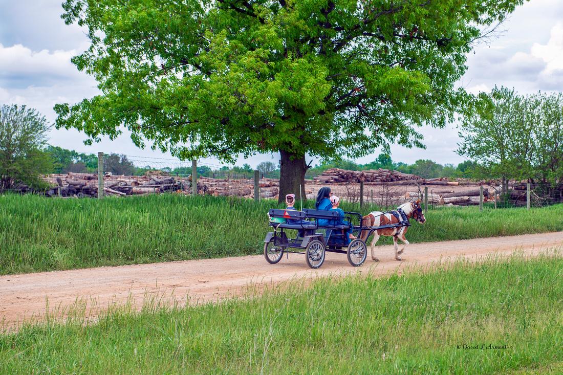 amish girls in pony cart 202105 _DSC3116 copy
