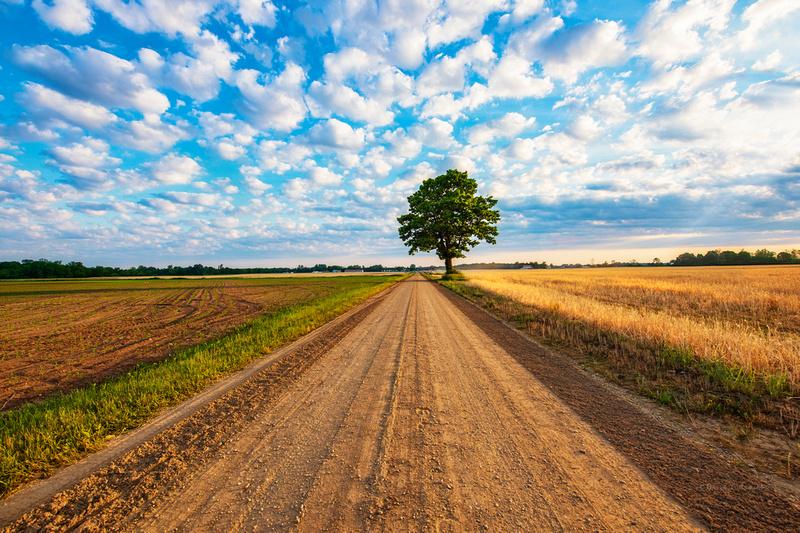 lone tree on dirt road 20210606 _DSC7992 copy