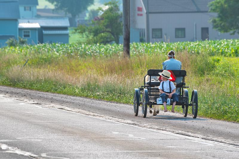 amish boy on pony cart 20210704 _DSC3162 copy