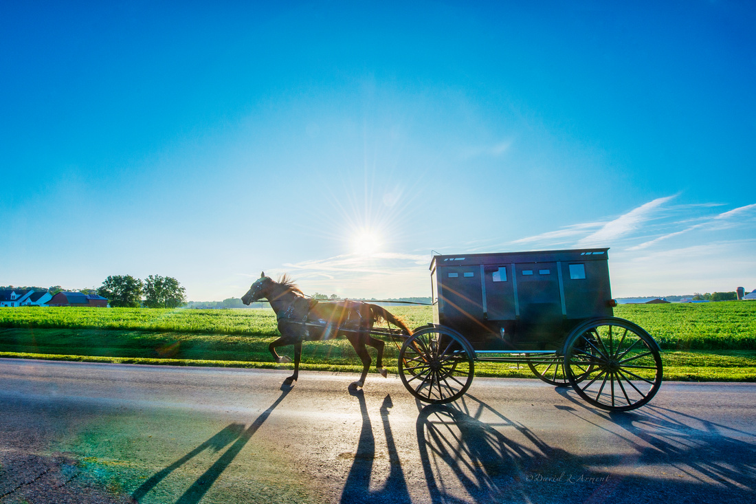 horse and buggy sunrise _DSC3648 copy 2
