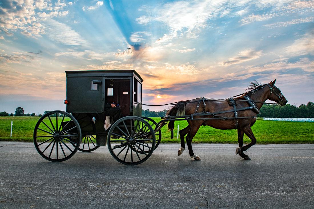Amish buggy morning w sunbeams 202109 _DSC5637 copy
