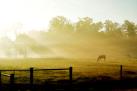 horse in pasture at sunrise w fog 20140926 _DSC0837