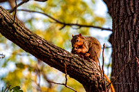 squirrel 20201024 _DSC1323