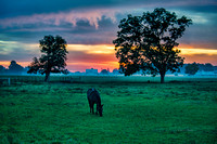 amish horse and farm 2014 _DSC0887
