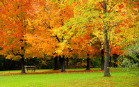 Fall Trees and Picnic Table