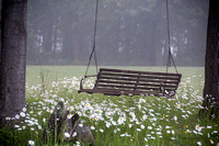 Bench Swing in the Daisies