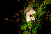 birdhouse at dusk _DSC3844