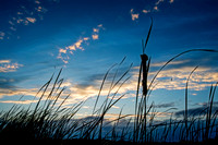 reed at sunset 20171007 _DSC0475