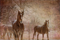 Amish Work Horses on Canvas Texture