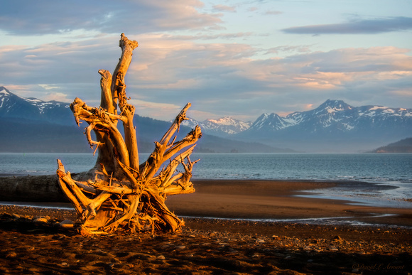 Roots at Sunset, Homer, AK
