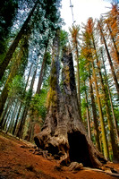 sequoia yosemite 20160504 _DSC7095