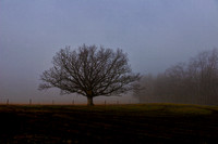 Tree on Foggy Day