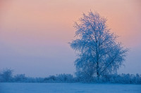 Tree in the Ice Fog