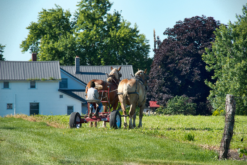 Amish Boy Waiting with The Horses