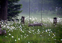 Swing in the Daisies