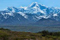 Grizzly and  Mt McKinley